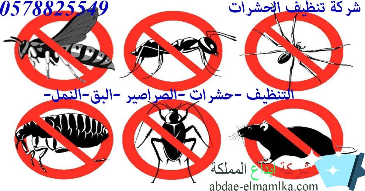 تنظيف حشرات